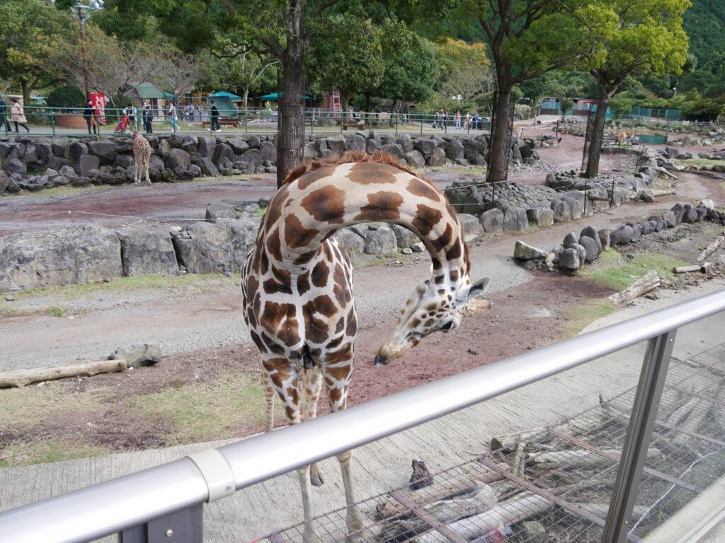 【伊豆アニマルキングダム】子連れレジャー旅行記 動物が超近い!遊園地併設で1日楽しめる動物園