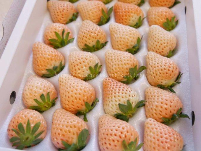白いいちご【淡雪】を実食!幻のホワイト苺の味の感想とお取り寄せ通販情報|贈答にも向いてます