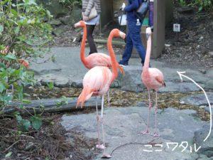 伊豆シャボテン公園フラミンゴ