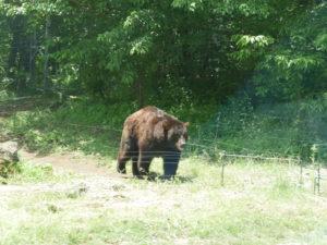 富士サファリパーク熊