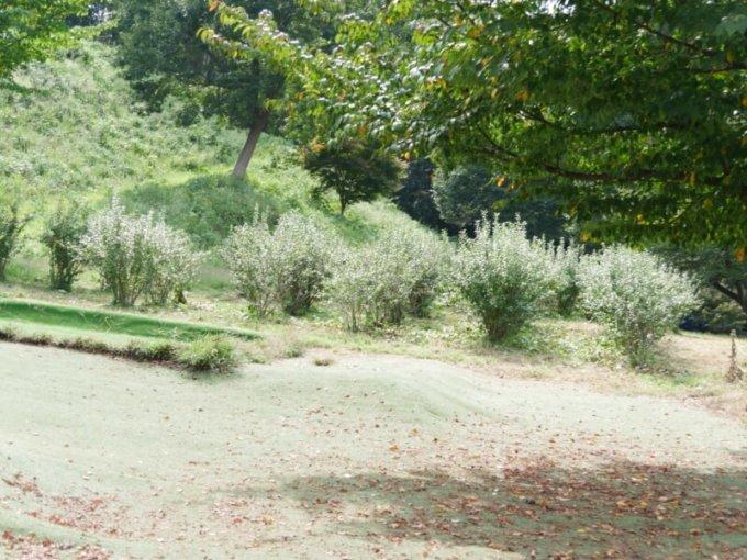 川場田園プラザのブルーベリー農園