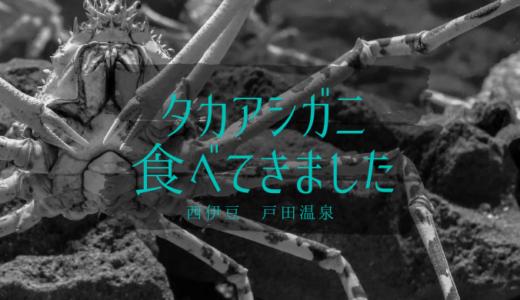 西伊豆の戸田温泉【高足ガニ】を食べました!美味しい?普通の蟹と違う?感想まとめ