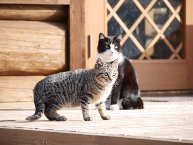 マホラリゾートの猫ちゃん